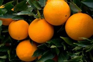 naranjas-navel-1411292732