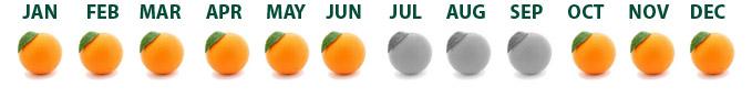 calendario naranjas_ing
